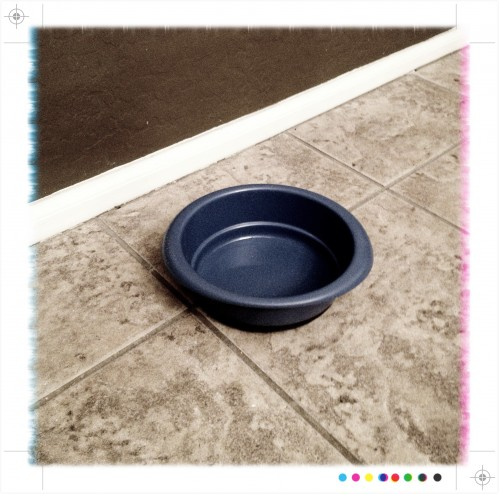 empty dog water bowl