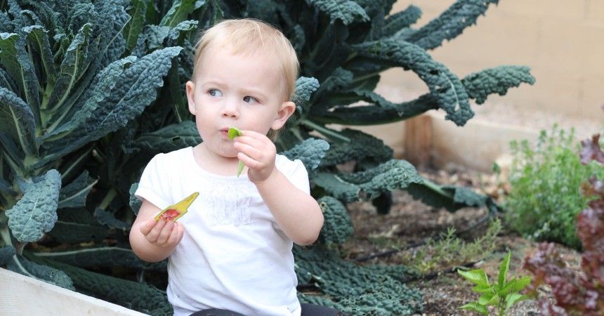 baby eating kale